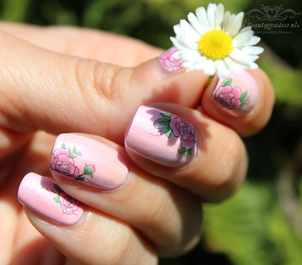 sweet_summer_roses_01
